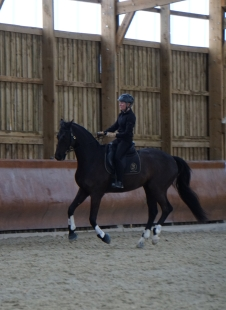 Work in canter with High Noon