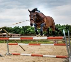 Bredero lunging over fences