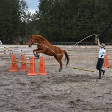 Shelbie lunges Maxx over obstacles