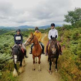 Keeping horses fit in Wicklow, Ireland