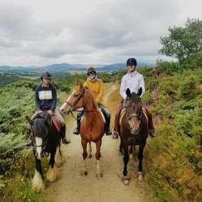 Keeping horses fit in Wicklow, Ireland